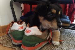 Espy- Espinete da cucciolo
