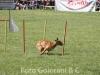 Agilityy Dog