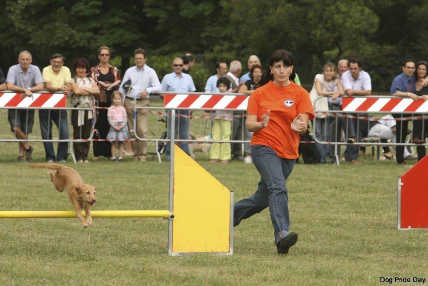 flying-dog-lucca