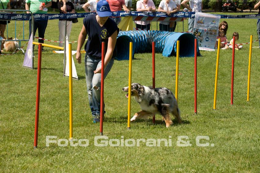 Agility Dog con il GS  Addestramento Cani Valdinievole