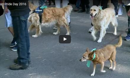 Dog Pride Day 2016 & TVL