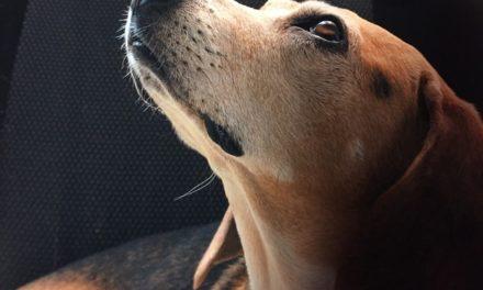 La Dichiarazione universale dei diritti degli animali compie 38 anni…
