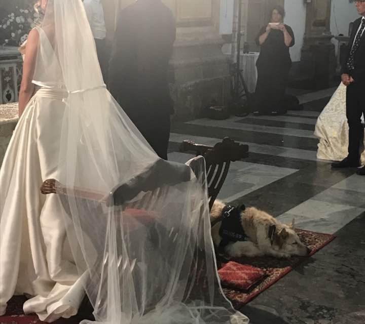 Matrimonio con damigella a 4 zampe