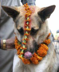 Dog Pride Day 2020