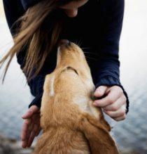 Vivere con un cane fa bene!