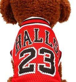 Un Basket da cani…