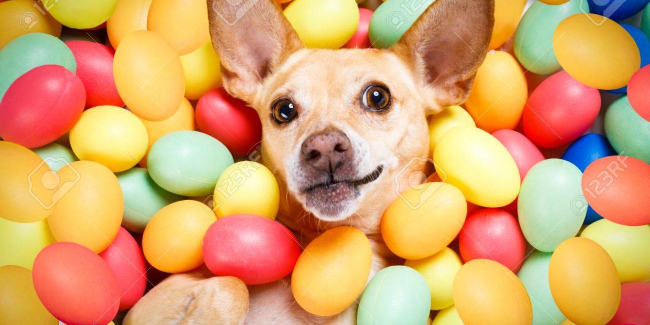 Buona Pasqua…