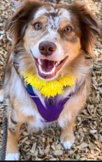 In Nepal c'è una festa dove ogni anno si ringraziano i cani per la loro amicizia e fedeltà. e lo faremo anche al DPD2020!
