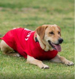 Squadra di calcio messicana adotta cane randagio