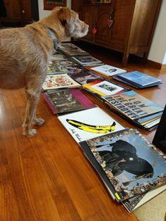 Dog Pride Day 2021: sarà con noi lo scrittore Luca D'Ambrosio!