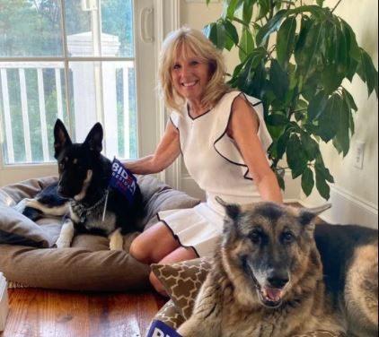 """Con Biden alla Casa Bianca tornano i cani: ecco Champ e Major, i nuovi """"first dogs"""""""