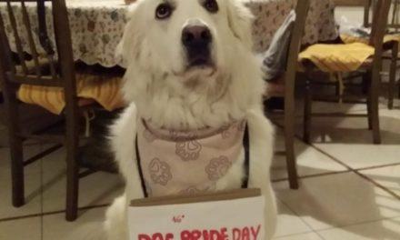 Dog Pride Day – Virtual Walk : Lollo è già pronto!